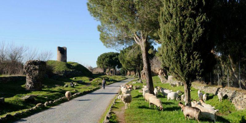 Pecore al pascolo al VI miglio della Via Appia Antica