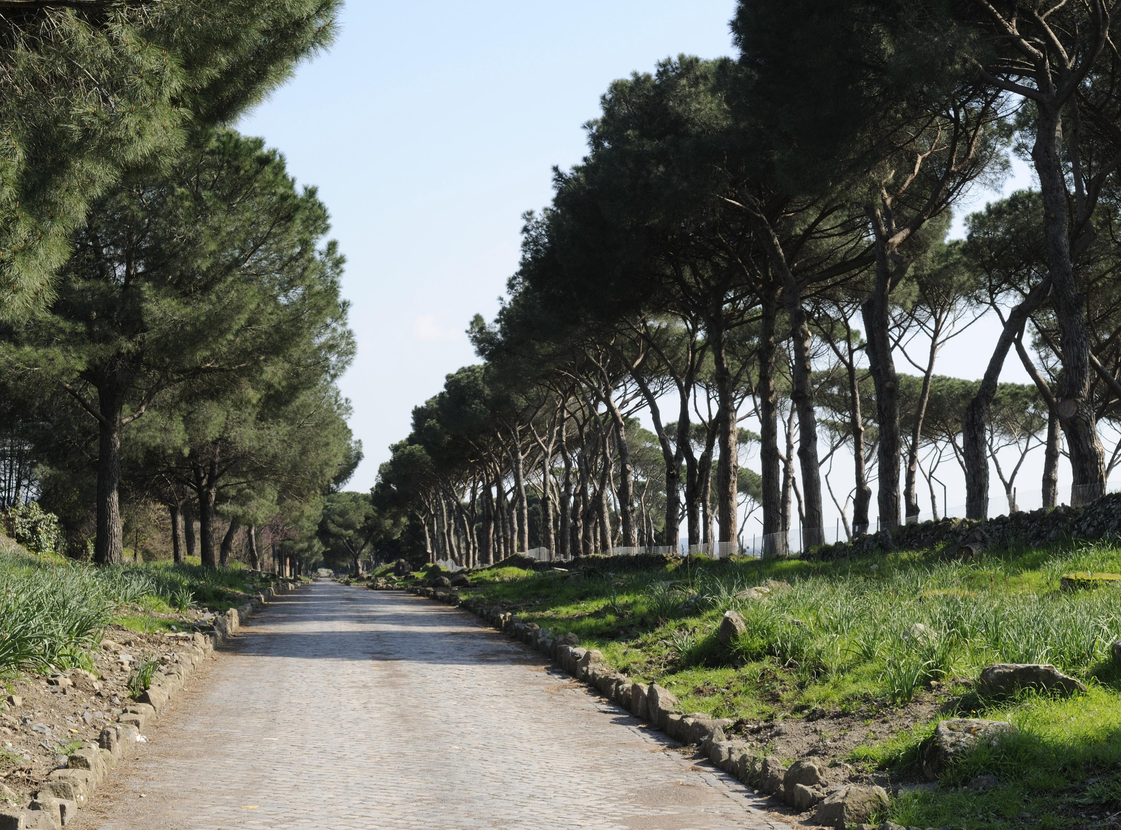 Il Parco cura i suoi pini colpiti dalla Cocciniglia Tartaruga